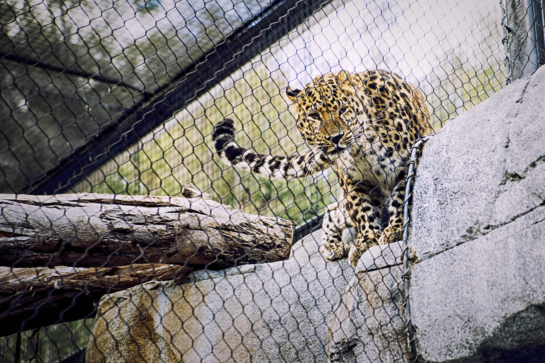 San Diego Zoo and Wild Life Safari Park